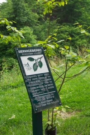 Serviceberry arboretum sign